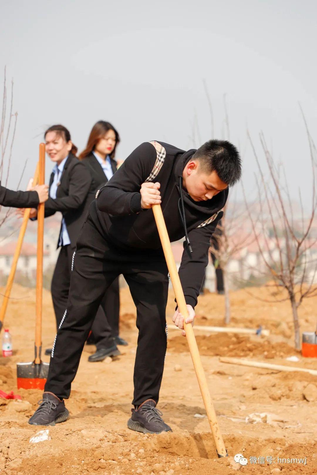 植树节活动
